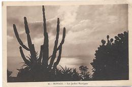 L100J252 - Monaco - 20 Les Jardins Exotiques - Exotic Garden