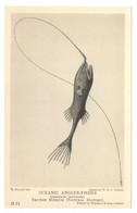 Oceanic Angler-Fishes Gigantactis Macronema British Museum Natural History Drawn By W. P. C. Tenison - Fish & Shellfish