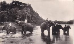 SRI LANKA. CEYLON. COLOMBO (ENVOYE DE).TAME ELEPHANTS BATHING; Annee &ç'ç - Sri Lanka (Ceylon)
