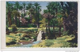 SCENES & TYPES , Algerie  -  JARDIN, Parc,   Palms - Alberi
