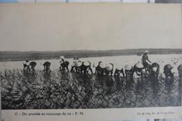 CPA Indochine - On Procède Au Repiquage Du Riz - Dos Vert Non Divisé Vierge - Vers 1910 - Vietnam