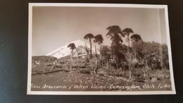 Chile - Pinos Araucarias Y Volcan Llaima - Curacautin - Cile
