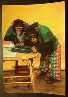 Singe Chimpanzé Tapant à La Machine à écrire.  Flamme Temporaire FOIRE DE PARIS , 1970 , TB - Animali Abbigliati
