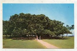 AK 04246 USA - Hawaii - Maui - Lahaina - Hawaii's Largest Banyan Tree - Maui