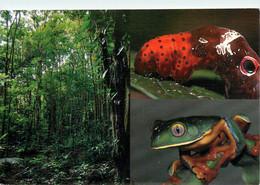 CPSM Costa Rica-Sarapiqui-Beau Timbre    L1003 - Costa Rica