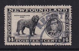 Newfoundland: 1937   Coronation Issue  SG262b   14c  [Perf: 13½]   Used - 1908-1947