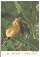 AA2924 Fiori Fleurs Flowers - Pianella Della Madonna (cypripedium Calceolus) / Non Viaggiata - Flowers