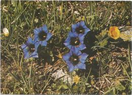 AA2929 Fiori Fleurs Flowers / Non Viaggiata - Flowers