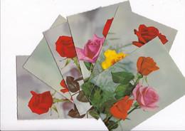 Lot 6 Jolies CPM Années 1950 ROSES - Flowers