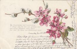 A791) In Blumenglanz Und Sonnenschein.... - Spruchkarte Mit Blumen - MB Sgniert - 1906 - Flowers