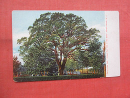 Perry's Old Oak.    Bound Brook.  New Jersey >       Ref 5233 - Unclassified