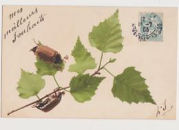 Carte Fantaisie   / 2 Hannetons Sur Une Branche - Insects