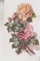FIORI ROSE ROSA ILLUSTRATORE ROTONDI  VG 1917 - Flowers
