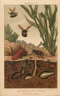 Themes Div Ref GG722- Insectes - Abeilles - Bees - Apiculture -les Ennemis Des Abeilles - Dimension 13cms X8,5cms -- - Insects