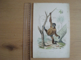IMAGE DESSIN ANCIEN  EDOUARD TRAVIER ORANG-OUTANG - Andere