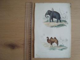 IMAGE DESSIN ANCIEN  EDOUARD TRAVIER L'ELEPHANT LE CHAMEAU - Andere