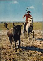 Gardien à Cheval Et Taureau  En  CAMARGUE - Bull