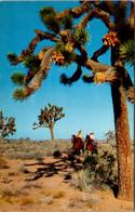 California Joshua Tree Forest Horseback Riders - Other