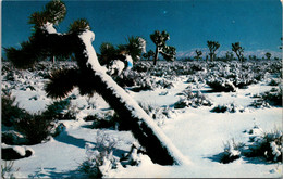 California Joshua Tree Forest In Winter - Other
