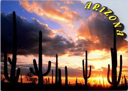 (6 A 15) USA - Arizona (shape Card) - Other