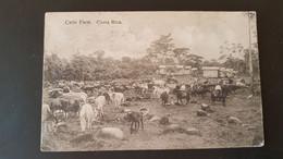 Costa Rica - Catle Farm - Costa Rica