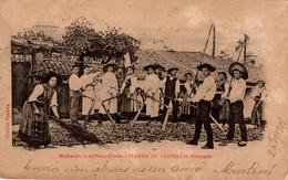 VIANA DO CASTELO - Malhando O Milho -  COSTUMES - PORTUGAL - Viana Do Castelo