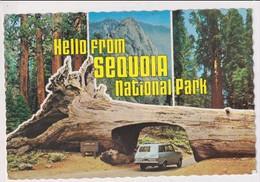 AK 05255 USA - California - Sequoia Natioal Park - Other