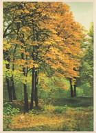Herbstwald - Kunstverlag Schwerdtfeger - Ohne Titel - Paintings