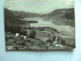 Noorwegen Norge Norway Norwegen Gudbrandsdalen Over Vagavatn Sheep - Norway