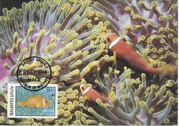 26128)  Maldives  WWF 1986 Fish Maxi Postcard Cover - Maldiven (1965-...)
