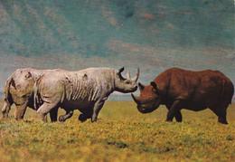 Rhino At Ngorongoro  Crater - Kenya - - Rhinoceros