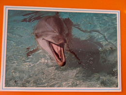 DAUPHIN  DOLPHIN - Dolphins