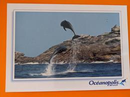 DAUPHIN  DOLPHIN OCEANOPOLIS BREST - Dolphins