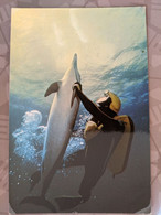 DAUPHIN  DOLPHIN HOMME GRENOUILLE COMMANDANT COUSTEAU - Dolphins