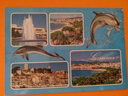 DAUPHIN  DOLPHIN NICE - Dolphins