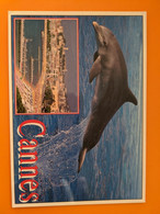 DAUPHIN  DOLPHIN CANNES - Dolphins