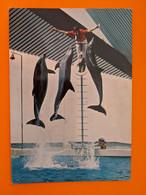 DAUPHIN  DOLPHIN PARC ZOOLOGIQUE - Dolphins
