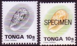 Tonga 1995  10s Shell - Proof In Black & White + Specimen - Tonga (1970-...)