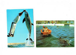 Lot 2 Cpm - Dauphins - Zoo Marin Port-Bacares - Spectacle Dauphin Tursiops Truncatus - Attelage - Dolphins