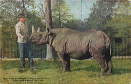Themes Div Ref GG583- Animaux -  Rhinoceros - - Rhinoceros