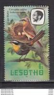 Lesotho, Oiseau, Bird, Robin, Merle, Nid, Neast, Oeuf, Egg - Altri