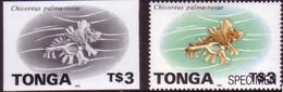Tonga 1996 Proof + Specimen - $3.00 Shell - Read Description - Conchiglie