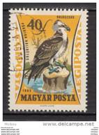 Hongrie, Hungary, Oiseau, Bird, Rapace, - Aquile & Rapaci Diurni