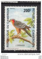 Cameroune, Cameroun, Cameroon, Oiseau, Bird, Rapace, épervier - Aquile & Rapaci Diurni