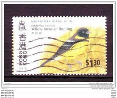 Hong Kong, Oiseau, Bird - Non Classificati