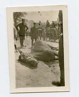 Snapshot Superbe Composition Mini Photo Cheval Tué Mort Dead Horse Militaire Soldat à Situer Identifier WW1 14-18 - Anonyme Personen