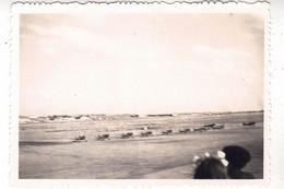 PHOTO  AVION  AVIATION NA T-6 TEXAAN EN ALGERIE - Luftfahrt