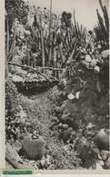 MONACO - JARDIN EXOTIQUE - Exotic Garden