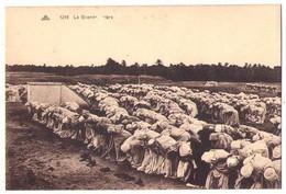 (Algérie) 029, CAP 1210, La Grande Prière - Sonstige