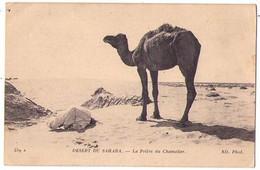 (Algérie) 023, ND Phot 459 A, Désert Du Sahara, La Prière Du Chamelier - Sonstige